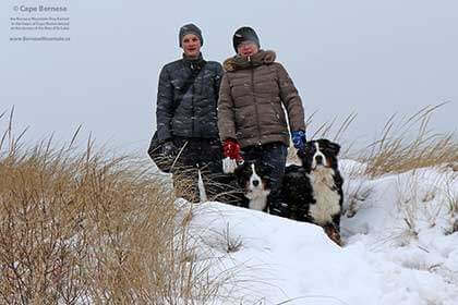 Bernese Mountain Dogs on Cape Breton Island